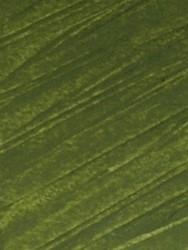 121244 Meadow Green