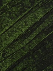 121251 Old Sap Green