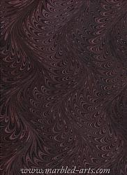 Marbled Chocolate Waved Icarus