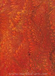 Marbled Fire Waved Icarus