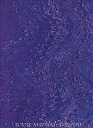 Marbled Purple Waved Icarus
